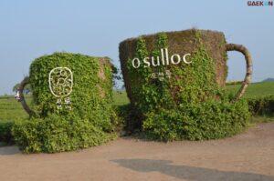 Museum Teh O'Sulloc, Manjakan Pengunjung Dengan Berbagai Jenis Teh