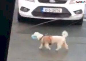Mesakke, Anjing Ini Dibuang Lalu Sekuat Tenaga Kejar Mobil Majikan