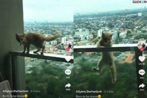 Bikin Jantungan, Kucing Ini Hampir Jatuh Dari Balkon Apartemen