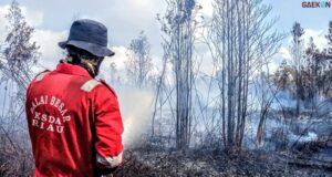 Kebakaran Hutan, Kawasan Paru-Paru Dunia, Cagar Biosfer Berubah Jadi Abu