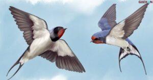 Nilai Ekspor Di Posisi Pertama, Indonesia Kuasai Pasar Sarang Burung Walet Di China