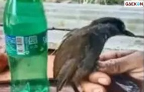 172 Tahun Menghilang, Burung Endemik Kalimantan Kembali Ditemukan