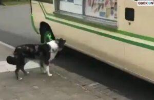Hentikan Mobil Penjual Es Krim, Anjing Ini Ternyata Minta Jatah Es