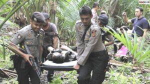 5 Anggota KKB Papua Kelompok Lekagak Telenggen Tewas Dalam Baku Tembak Dengan Satgas Nemangkawi