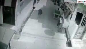 Kepala Dijahit Hingga 22 Jahitan, Anak Kecil Ini Jadi Korban Serangan Monyet Liar