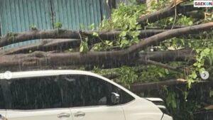Tertimpa Pohon Besar, Mobil Yang Ditumpangi Erros Djarot Ringsek