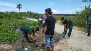 BKSDA Sulteng Lepasliarkan Buaya Tangkapan Warga Di Sungai Roraya Taman Nasional Rawa Aopa