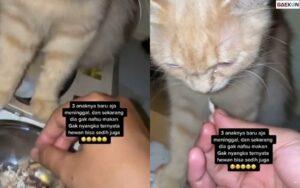 Sedih Bukan Main, Kucing Ini Ditinggal Mati 3 Anaknya