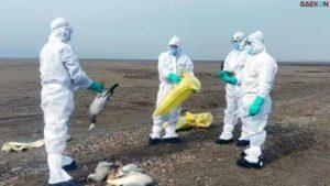 Jadi Kasus Pertama Di Dunia, Pria Di China Ini Terinfeksi Virus Flu Burung H10N3