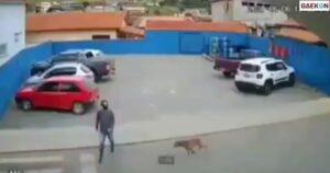 Terekam CCTV, Pria Ini Ditabrak Lari Seekor Anjing Saat Hendak Menyeberang