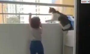 Viral Seekor Kucing Cegah Anak Balita Yang Hendak Melompat Dari Pagar Balkon