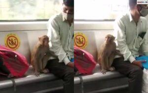 Heboh Monyet Masuk KRL, Para Penumpang Sontak Menghindar