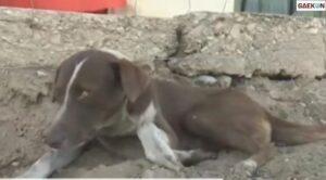 Kisah Anjing Setia, Selalu Menunggu Tuannya Di Tempat Kerja Meski Telah Tiada