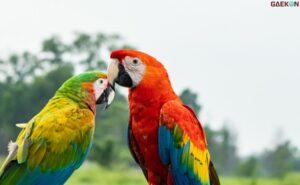 Tak Ada Pemasukan, Pengelola Objek Wisata Di Lembang Jual 6 Burung Macaw Untuk Gaji Pegawai