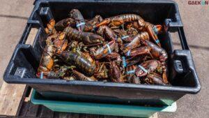 Buru Penyelundup Benih Lobster, KKP Siapkan 2 Unit Speedboat