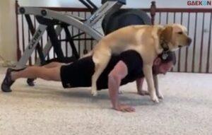 Bikin Gemas, Anjing Ini Setia Temani Tuannya Push Up