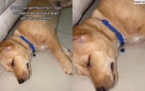Bikin Sedih Warganet, Anjing Ini Menangis Sesenggukan Saat Dimarahi Pemiliknya