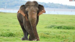 Mirip Manusia, Gajah Di Sri Lanka Juga Punya KTP