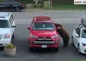 Viral, Seekor Beruang Nekat Bobol Mobil Di Pinggir Jalan