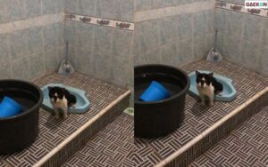Bikin Takjub, Kucing Ini Pergi Ke WC Saat Hendak BAB