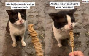 Viral, Anak Kucing Ini Menangis Sambil Menatap Makanannya