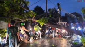 Hujan Angin Depok, 622 Gardu PLN Terdampak, Pohon Bertumbangan Hingga Atap Warga Terbang