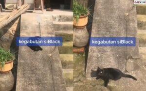 Bikin Gemas, Kucing Ini Main Perosotan Di Tangga Rumah Warga